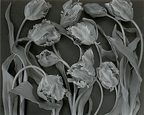 Black and white printing masterclass with john blakemore
