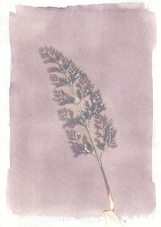 Image on an Anthotype, a textured paper with a pale lilac base painted on, in the centre is a darker outline of a fern.